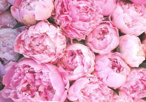 Peonie e matrimonio idee allestimenti e bouquet sposa