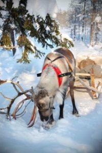 viaggio di nozze finlandia natura e magia 12
